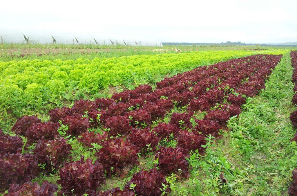 Agriculture bio: halte au sabotage de Pécresse!
