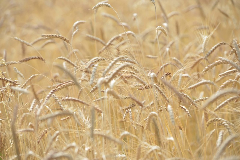 L'agriculture bio en danger !
